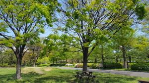 江東区猿江公園でパークヨガ @ 猿江公園 | 江東区 | 東京都 | 日本