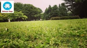 【受付終了】7/3 代々木公園で朝ヨガ @ 代々木公園